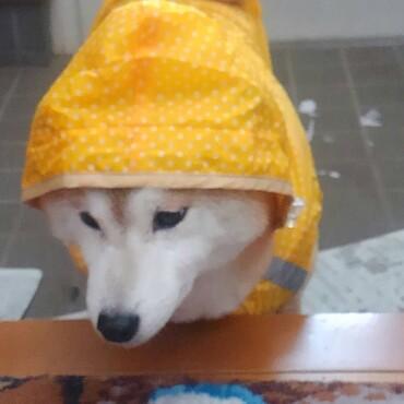 fukumilさん♡カッパはこんな感じ‼高く無いよ♪1000円台 お腹の下でとめるから着るのも簡単だよ♪
