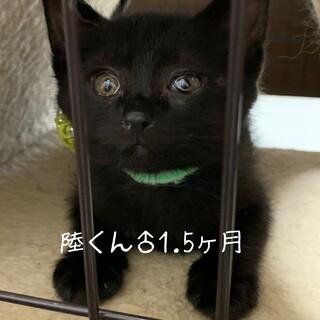 福を呼ぶ黒猫兄妹