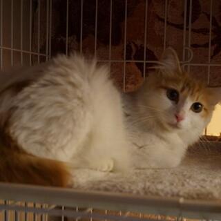 美しすぎる野良猫ちびちゃん、医療・しつけ済