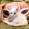 青い瞳の白い妖精3兄妹お膝でゴロゴロ サムネイル7