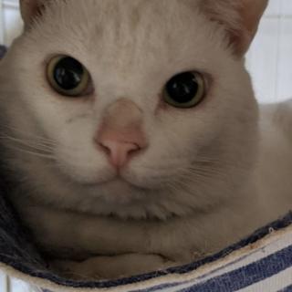 純白のティロ君2歳