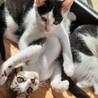 生後4ヵ月ほどの子猫4匹です。