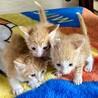 捨てられた子猫の兄弟を助けて下さい!