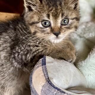 母猫は死亡、一人ぼっちになった子猫を助けて下さい!