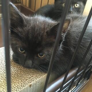 優しい黒猫君の家族募集中
