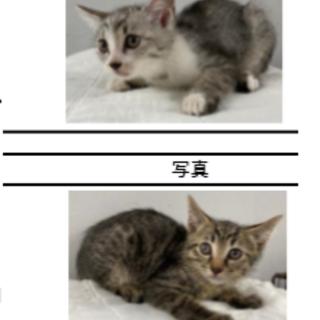 可愛い5兄弟①女の子2匹 収容期限6/8朝迄