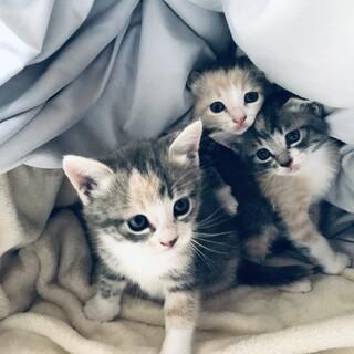 子猫の引き取り募集