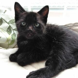 甘えん坊の黒猫とシャイなハチワレ