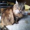 猫洗い日和!