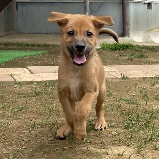 Mellow's Pups♡Elio