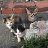 可愛い三兄弟です