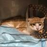 苦難を乗り越えた猫さんに温かい家族を探しています
