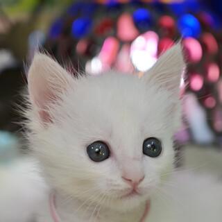 白5兄弟(ピンク)♀