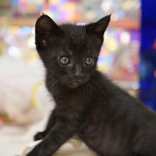 ハンサムな黒猫くん