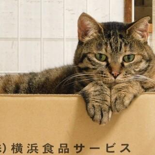 6/7 譲渡会参加予定☆吉田家康くん