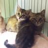 親子猫、3匹一緒に募集です!
