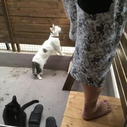 「ユズコさん、今日は猫設備メンテの日」サムネイル1