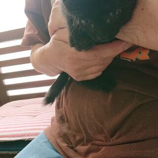「えりちゃん」黒猫  三兄妹
