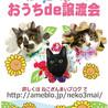 【姉妹一緒に】ミチコちゃん♡2ヶ月弱 サムネイル5