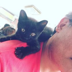 肩乗り子猫を飼ってみたくないですか?