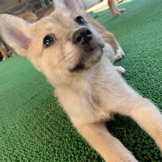 Mellow's Pups♡Phoebe