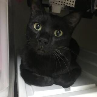 小型の黒ヒョウみたい!のんびり黒ちゃんどっしり!