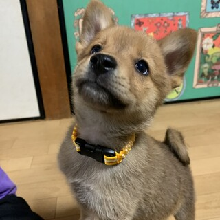 Mellow's Pups♡Leto