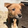 Mellow's Pups♡Atlas