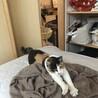 人馴れ訓練中 猫大好きレミちゃん 推定8ヶ月 サムネイル2