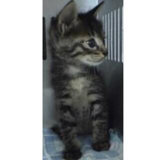 里親様に迎えられました。子猫♀039