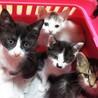 可愛い仔猫達4匹