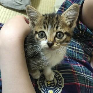 【緊急】子猫の里親になってください