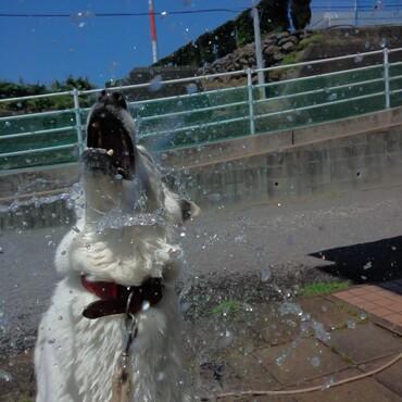 大好きな水遊び!!