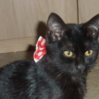 黒猫の女の子