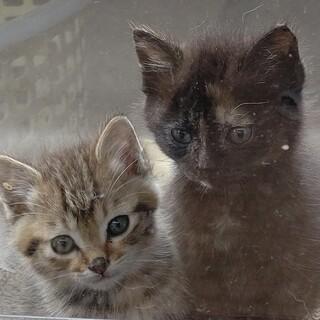 元気な子猫2匹の里親を探しています。