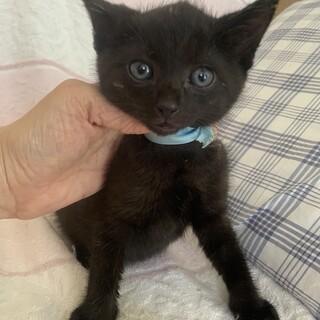 可愛い黒猫としぞう君