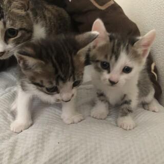 最後1ヶ月の可愛い子猫ちゃん✨