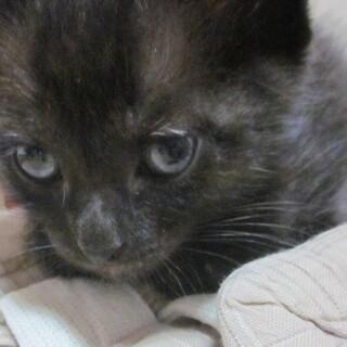 おちびさんの黒子猫♂