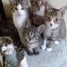 子猫たちの新しいおうちを探してます