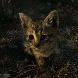 敷地内で野良猫が子猫を生んでいる