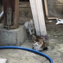 敷地内で野良猫が子猫を生んでいるサムネイル