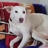 美人犬(楓) サムネイル3