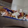 美人犬(楓) サムネイル5