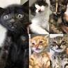 愛らしい5匹の子猫たち
