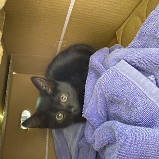 2ヶ月半の黒猫ちゃん