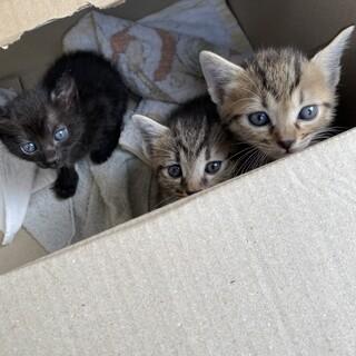 子猫、成猫里親募集❗️