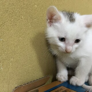 可愛い仔猫をお願いします。