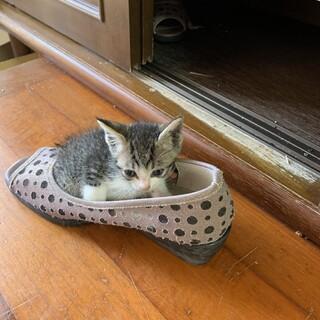 やんちゃなチビ猫ちゃんです