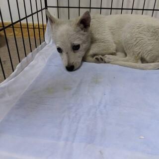 野犬の群れで生まれ捕獲された子犬