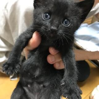 黒猫 メイちゃん 1ヶ月 めす